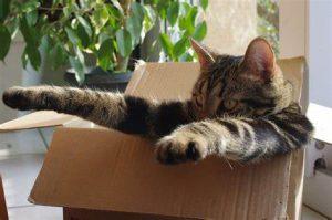 Cat stuck in box